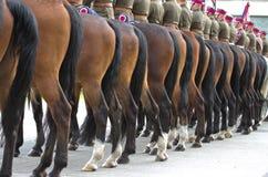 Separación del caballo Fotografía de archivo