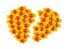 Separado en forma de corazón de las flores amarillas hermosas Fotografía de archivo libre de regalías