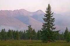 Separat lärkskog på bakgrundsbergskedjan royaltyfri fotografi