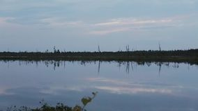 Separate dry trees on the shore of a forest lake in the late evening. The Siberian tundra. Separate dry trees on the shore of a forest lake in the late evening stock footage