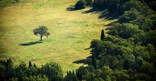 Separate Tree Royalty Free Stock Photo