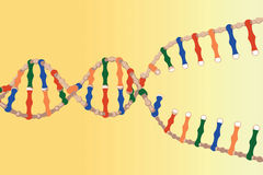 Separated DNA strands Stock Photos