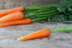 Separately placed carrot on old wooden desk. Separately placed carrots, with a bunch of carrots in the background on old wooden desk Royalty Free Stock Photos