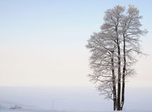 Separately standing tree near the lake in winter. Separately standing lonaly tree near the lake in winter with snow Royalty Free Stock Images