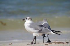 Separation: 2 birds facing the sea royalty free stock image