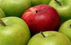 Separation concepts with apples. Separation concepts - red apple between green apples Royalty Free Stock Photo