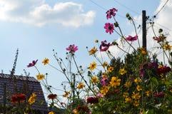 separazione dei fiori immagini stock libere da diritti