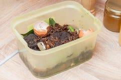 Separazione dei rifiuti organici delle coperture del pollo, motivi di caffè nella cucina per il fertilizzante domestico del giard fotografia stock libera da diritti