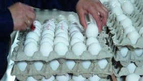 Separazione del processo nell'azienda agricola di pollo delle uova stock footage