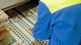 Separazione delle uova trattate in un'azienda agricola di pollo video d archivio