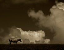 sepia лошади сценарный Стоковые Фотографии RF