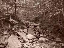 Sepia потока фидера заводи Chittenango стоковые фотографии rf