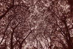 Sepia силуэта дерева стоковые изображения rf