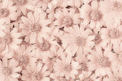 Sepia стиля конспекта цветков тонизирует на стенах, идее проекта обоев Стоковые Фото