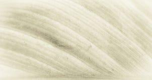 Sepia тонизировал лист с мягким фокусом Стоковая Фотография RF