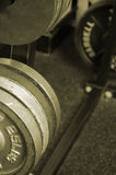 Sepia 25 lb weights. Sepia weight rack Stock Image