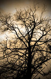 Sepia abstract branches silhouette Stock Photos