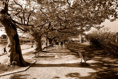 Sepia alley Royalty Free Stock Images