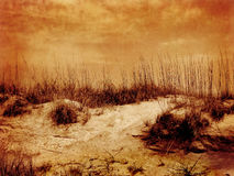 Sepia Beach Dunes and Grass Royalty Free Stock Photo
