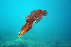 Sepia Bonaire Imagens de Stock Royalty Free