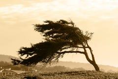 Sepia boom Stock Afbeeldingen