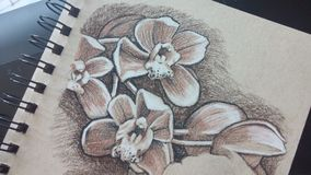 Sepia charcoal drawing of orchids. Tan paper sketchbook with orchids drawn in sepia and charcoal pencils Royalty Free Stock Photography