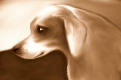 Sepia clássico do cão da rua ilustração do vetor