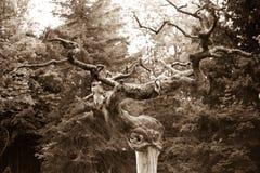 Sepia da árvore fotos de stock