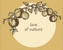 Sepia da ilustração do ramo de árvore de Apple Fotografia de Stock