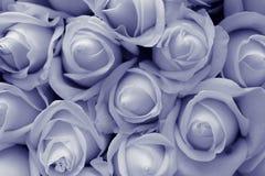 Sepia da textura das rosas Foto de Stock Royalty Free