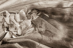 Sepia delicate background with flower fabric Royalty Free Stock Photo