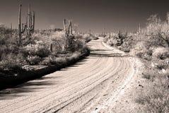 Sepia do Arizona do deserto do Sonora da estrada do deserto tonificado imagens de stock royalty free
