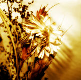 Sepia Flower. A flower in sepia tone Royalty Free Stock Image