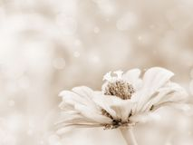 Sepia flower background Stock Photography