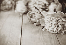 Sepia flowers on wooden background Royalty Free Stock Photography