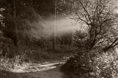 Sepia Fog Stock Photography