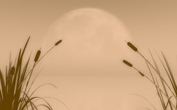Sepia fog and mist over water. Soft sepia nature water background with reeds and catail, foxtail grasses. Original illustration Royalty Free Stock Photos