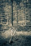 Sepia forest royalty free stock photography