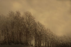 Sepia forest Stock Photo