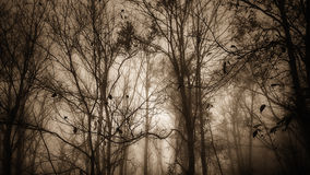 Sepia forest shades. Winter forest trees on a misty day in sepia tone Stock Images