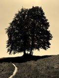 Sepia foto van de grote schaduwbomen op de heuvel met zandige weg Royalty-vrije Stock Foto