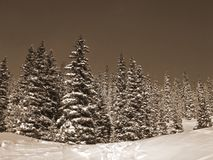 Sepia Gestemde Sneeuw op Bomen Stock Afbeelding