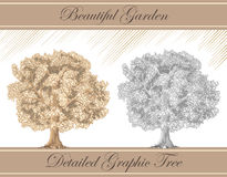 Sepia gráfica detallada y lápiz del árbol Fotos de archivo