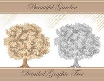 Sepia gráfico detalhado e lápis da árvore ilustração do vetor
