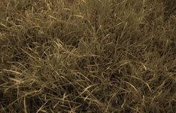 Sepia grass background Royalty Free Stock Images