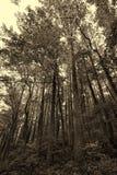 Sepia Great Smoky Mountain Park Landscape Stock Photos
