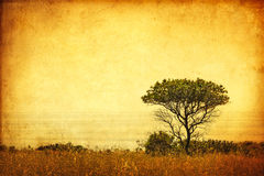 Sepia Grunge Tree Royalty Free Stock Image