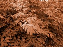 Bush. Sepia image warm filter neutral background Stock Images