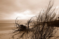 Sepia Island Stock Photo