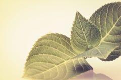 Sepia kleurentoon van mooie groene bladtak Royalty-vrije Stock Afbeeldingen